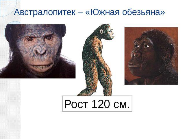 Австралопитек – «Южная обезьяна» Рост 120 см.