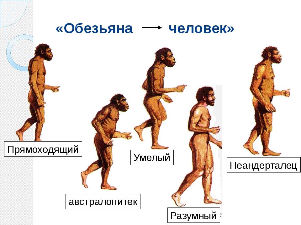«Обезьяна человек» австралопитек Прямоходящий Умелый Неандерталец Разумный