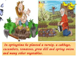 In springtime he planted a turnip, a cabbage, cucumbers, tomatoes, grew dill