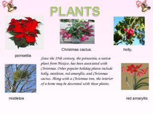 poinsettia holly, mistletoe Since the 19th century, the poinsettia, a native
