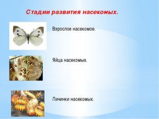 Стадии развития насекомых. Взрослое насекомое. Яйца насекомых. Личинки насек
