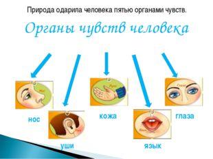 Природа одарила человека пятью органами чувств. Органы чувств человека