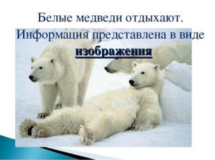 Белые медведи отдыхают. Информация представлена в виде изображения