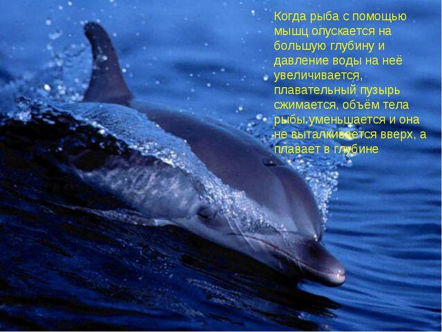 Актуализация знаний. Когда рыба с помощью мышц опускается на большую глубину...