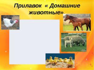 Прилавок « Домашние животные».