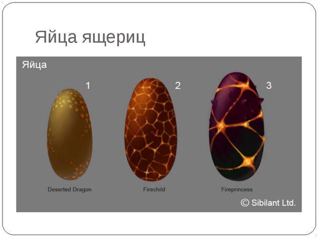 Яйца ящериц