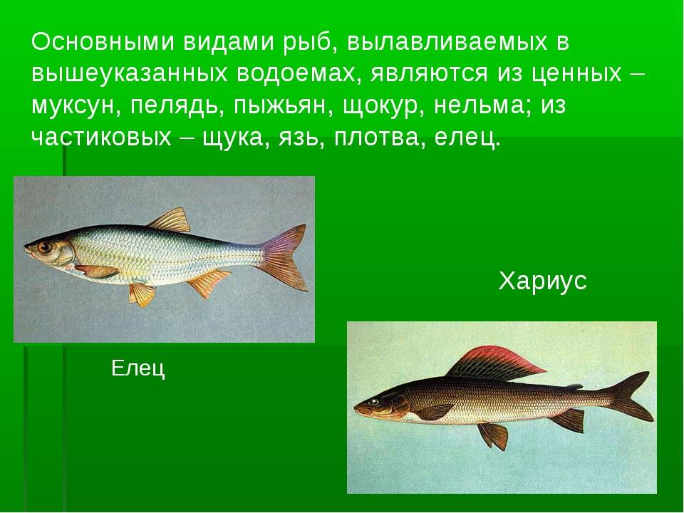 Основными видами рыб, вылавливаемых в вышеуказанных водоемах, являются из цен...
