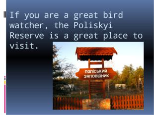 If you are a great bird watcher, the Poliskyi Reserve is a great place to vis