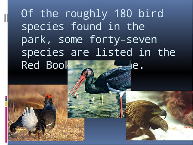 Of the roughly 180 bird species found in the park, some forty-seven species a...