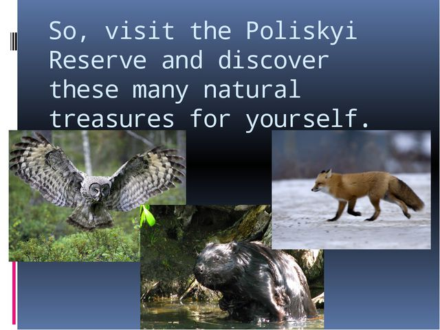 So, visit the Poliskyi Reserve and discover these many natural treasures for...