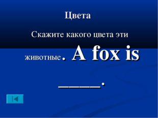 Цвета Скажите какого цвета эти животные. A fox is ____.
