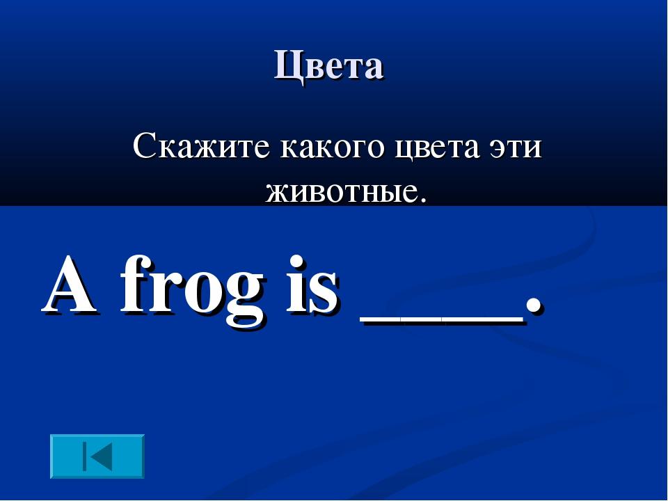 Цвета Скажите какого цвета эти животные. A frog is ____.