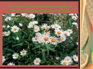 Есть на полях моей родины скромные Сестры и братья заморских цветов.