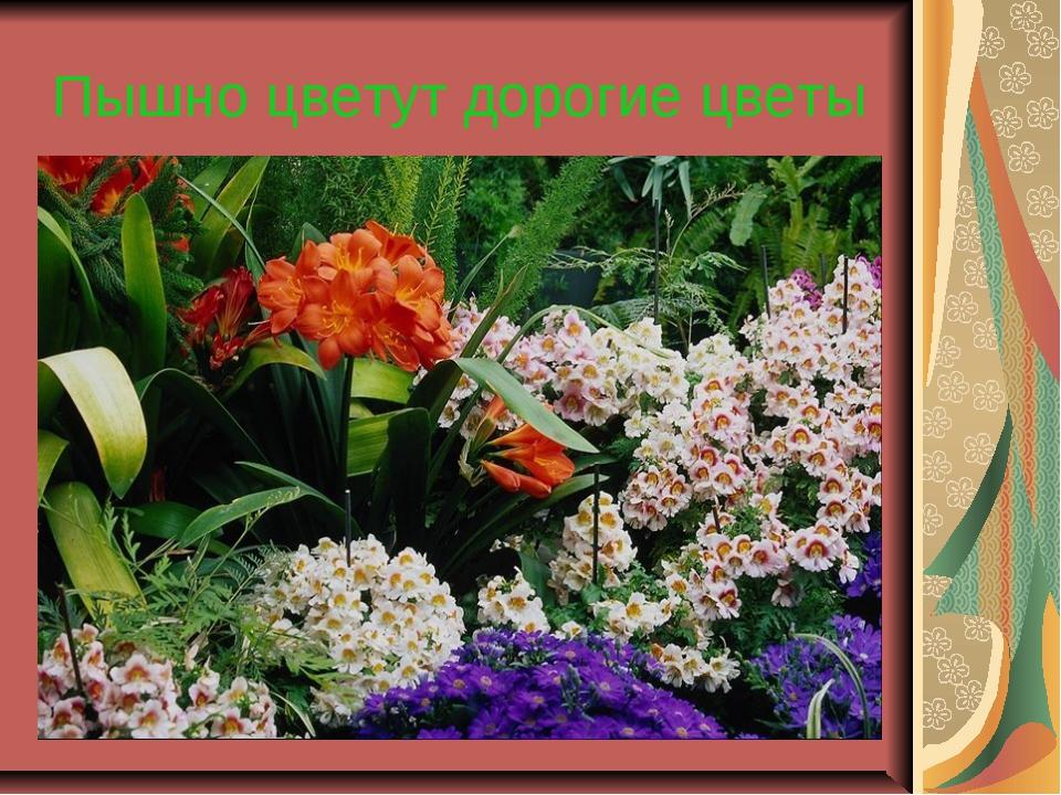 Пышно цветут дорогие цветы