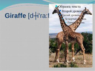 Giraffe [dʒi'ra:f]