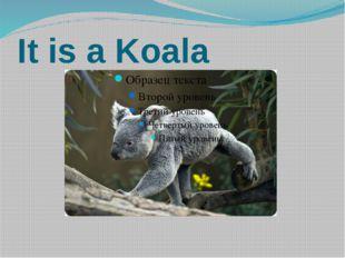 It is a Koala