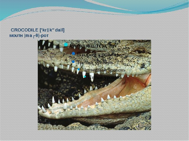 CROCODILE ['krɔkədail] MOUTH |maʊθ|-рот