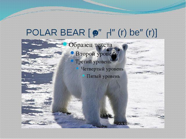 POLAR BEAR [ˈpəʊlə(r) beə(r)]