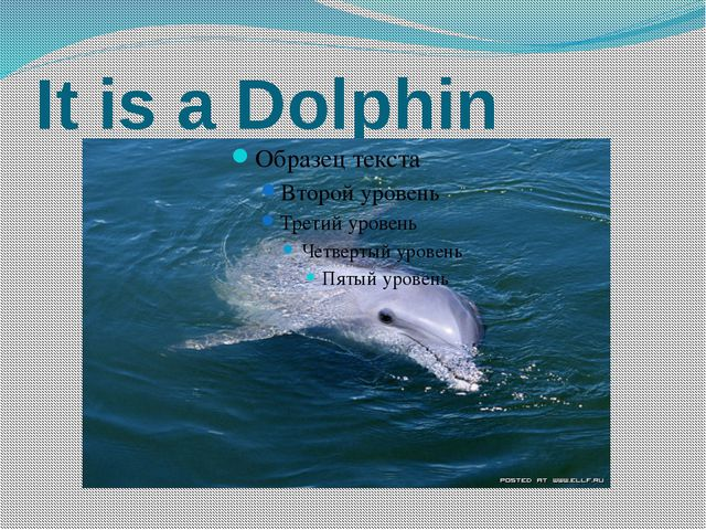 It is a Dolphin