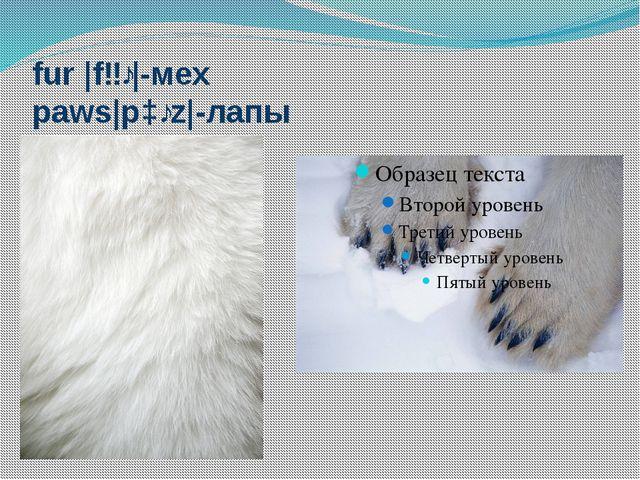 fur |fɜː|-мех paws|pɔːz|-лапы
