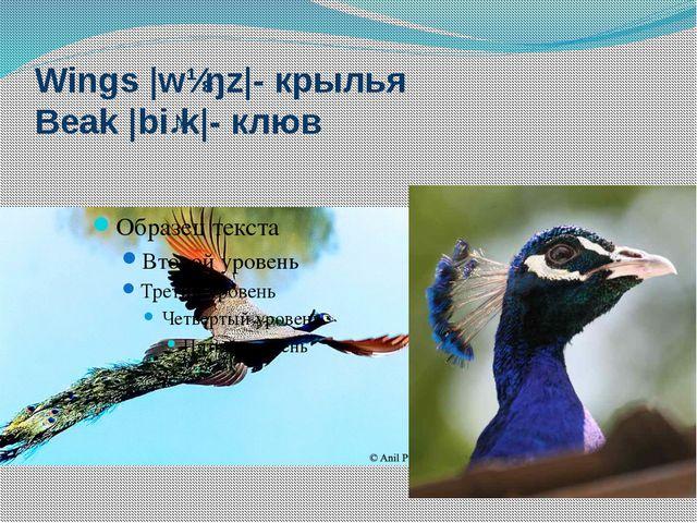Wings |wɪŋz|- крылья Beak |biːk|- клюв