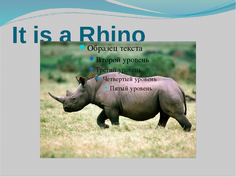 It is a Rhino