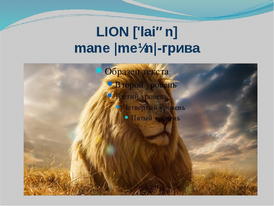 LION ['laiən] mane |meɪn|-грива