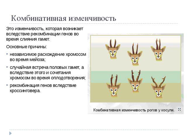Комбинативная изменчивость Это изменчивость, которая возникает вследствие рек...