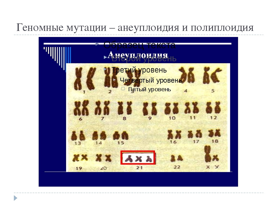 Геномные мутации – анеуплоидия и полиплоидия
