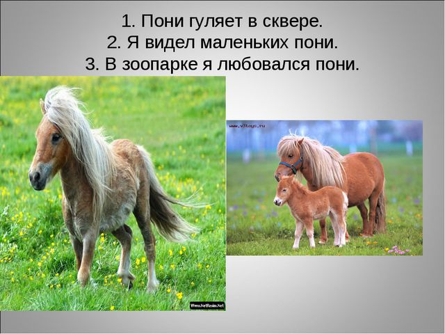 1. Пони гуляет в сквере. 2. Я видел маленьких пони. 3. В зоопарке я любовался...
