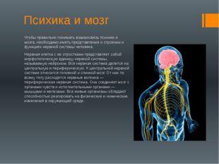 Психика и мозг Чтобы правильно понимать взаимосвязь психики и мозга, необходи
