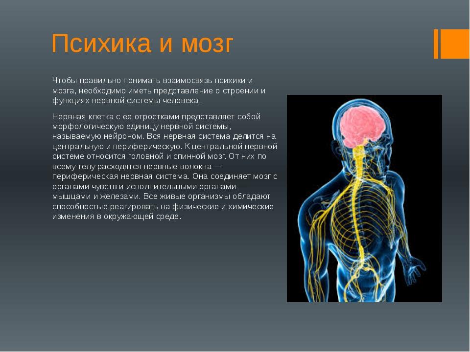 Психика и мозг Чтобы правильно понимать взаимосвязь психики и мозга, необходи...