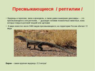 Пресмыкающиеся / рептилии / Ящерицы и черепахи, змеи и крокодилы, а также дав