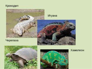 Крокодил Игуана Черепаха Хамелеон