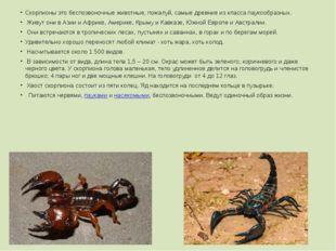 Скорпионы это беспозвоночные животные, пожалуй, самые древние из класса пауко