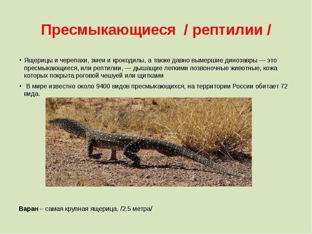 Пресмыкающиеся / рептилии / Ящерицы и черепахи, змеи и крокодилы, а также дав...