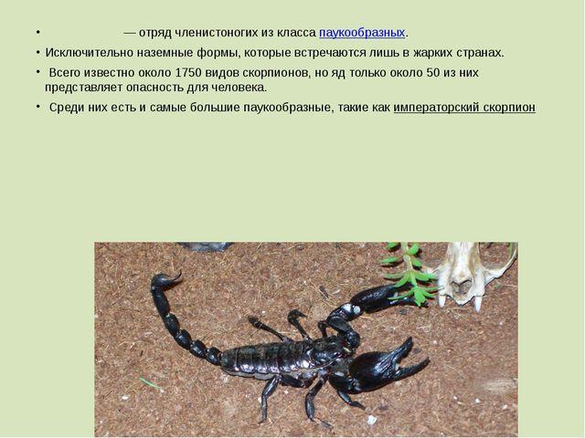 Скорпио́ны— отрядчленистоногихиз классапаукообразных. Исключительно назем...