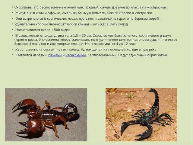 Скорпионы это беспозвоночные животные, пожалуй, самые древние из класса пауко...