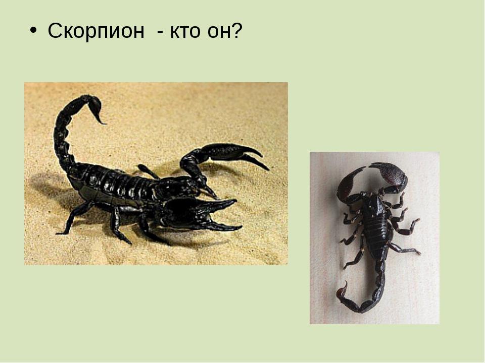 Скорпион - кто он?