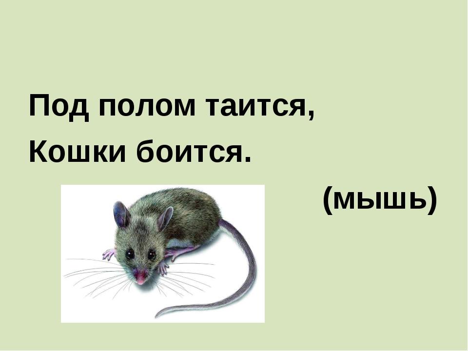 Под полом таится, Кошки боится. (мышь)