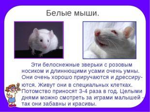 Белые мыши. Эти белоснежные зверьки с розовым носиком и длиннющими усами оч
