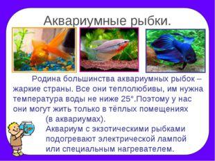 Аквариумные рыбки. Родина большинства аквариумных рыбок – жаркие страны. Все