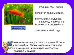 Родиной этой рыбки являются воды Мексики, Гватемалы, Гондураса. В Европу, а