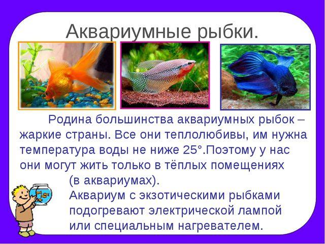Аквариумные рыбки. Родина большинства аквариумных рыбок – жаркие страны. Все...