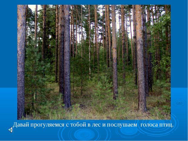 Давай прогуляемся с тобой в лес и послушаем голоса птиц.
