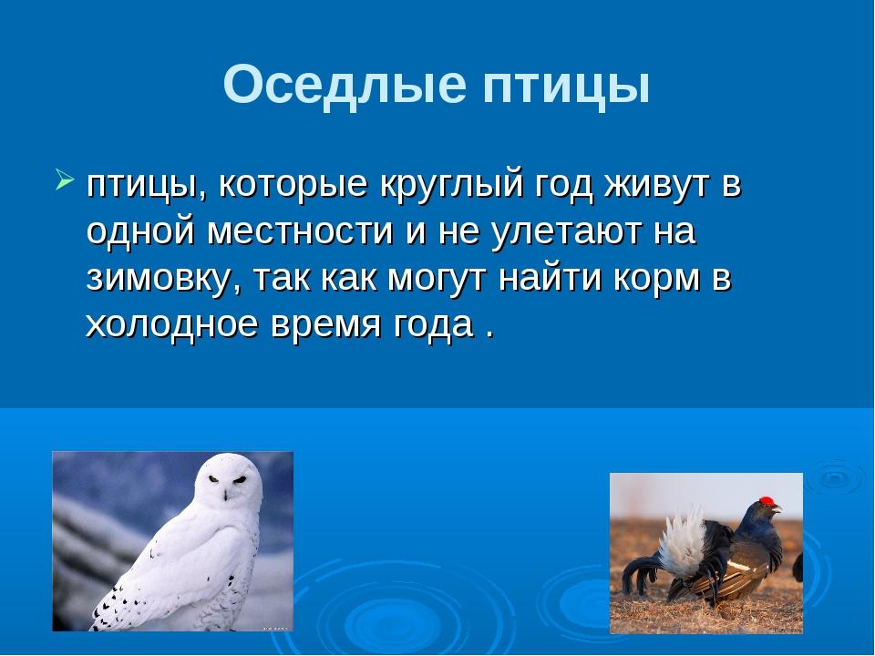 Оседлые птицы птицы, которые круглый год живут в одной местности и не улетают...