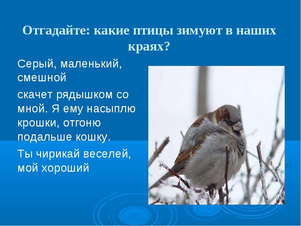 Отгадайте: какие птицы зимуют в наших краях? Серый, маленький, смешной скачет...