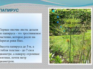 ПАПИРУС Первые писчие листы делали из папируса - это тростниковое растение, к