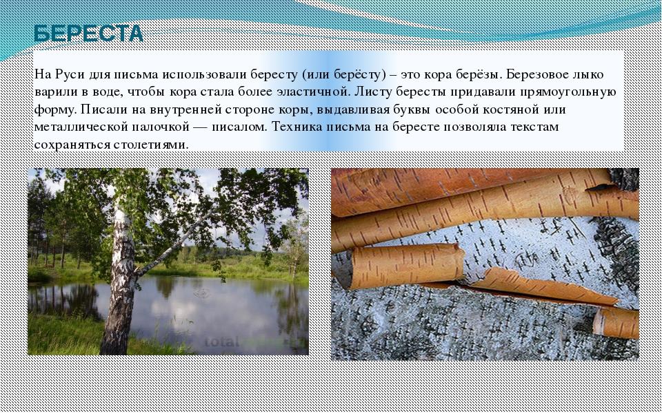 БЕРЕСТА На Руси для письма использовали бересту (или берёсту) – это кора берё...