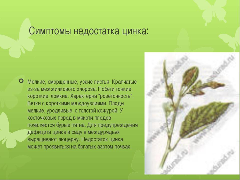 Симптомы недостатка цинка: Мелкие, сморщенные, узкие листья. Крапчатые из-за...